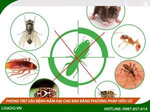 Phòng trừ sâu bệnh nấm hại bằng phương pháp hữu cơ
