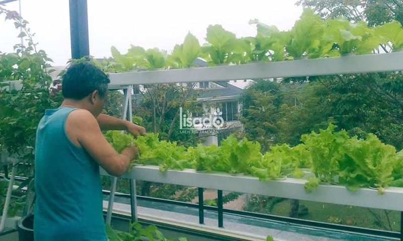 Vì sao nên chọn ban công để trồng rau thủy canh cho nhà phố, nhà chung cư?