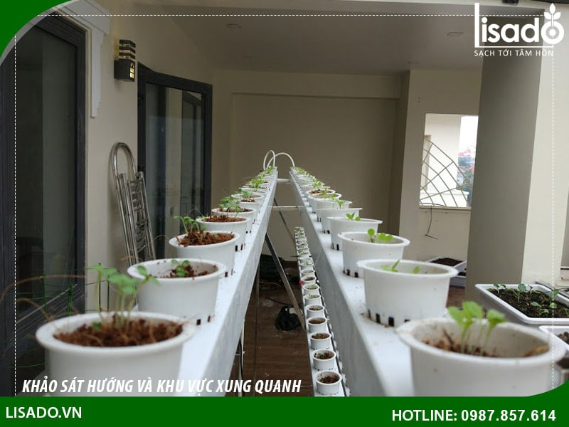 Cần chuẩn bị gì trước khi trồng phương pháp thuỷ canh