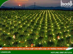 Tư vấn chọn loại đèn led phù hợp cho mỗi loại cây trồng trong nhà