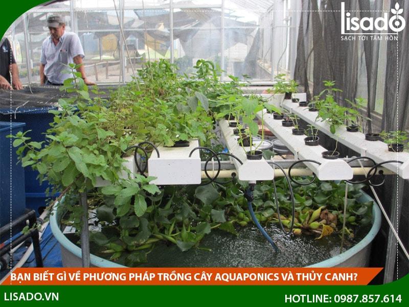 Bạn biết gì về phương pháp trồng cây Aquaponics và thủy canh?