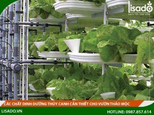 Các chất dinh dưỡng thủy canh cần thiết cho vườn thảo mộc