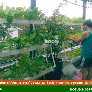 Công Trình Trồng Rau Thủy Canh Nhà Bác Chương Ecopark Hà Nội