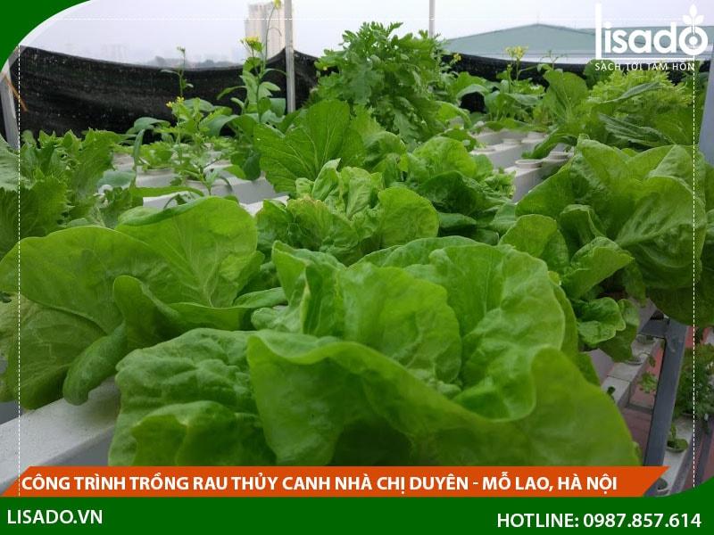 Công Trình Trồng Rau Thủy Canh Nhà Chị Duyên – Mỗ Lao, Hà Nội