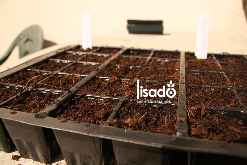 Đặt khay hạt giống rau ở nói thoáng mát sau khi gieo
