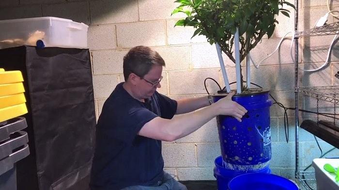 Cách thay nước thủy canh