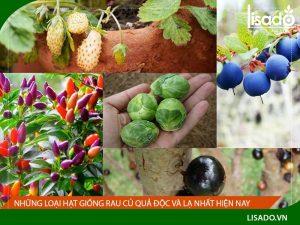 Những loại hạt giống rau củ quả độc và lạ nhất hiện nay