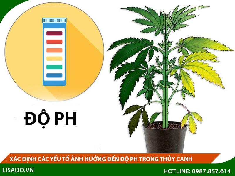 Xác định các yếu tố ảnh hưởng đến độ pH trong thủy canh