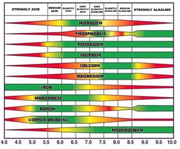 Những yếu tố ảnh hưởng đến độ pH trong dung dịch thủy canh