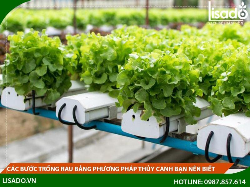 Các bước trồng rau thủy canh bạn nên biết