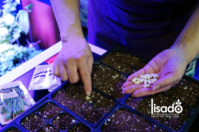 Gieo hạt giống vào khay đựng chất nền