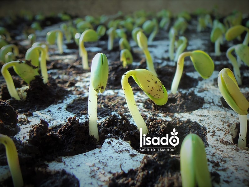 Lên kế hoạch để bắt đầu gieo hạt vào thời điểm thích hợp