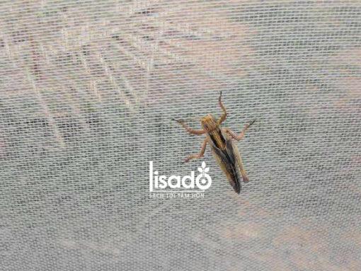 Lưới chống côn trùng nông nghiệp