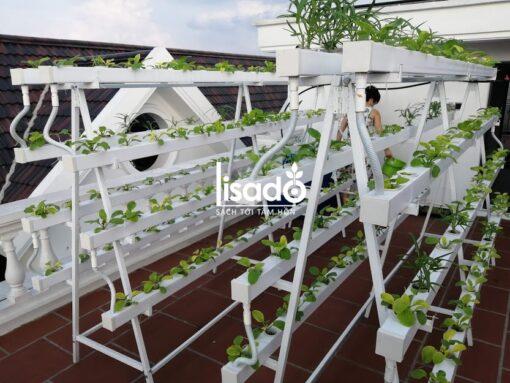 Giàn trồng rau thủy canh chữ A GLS-03