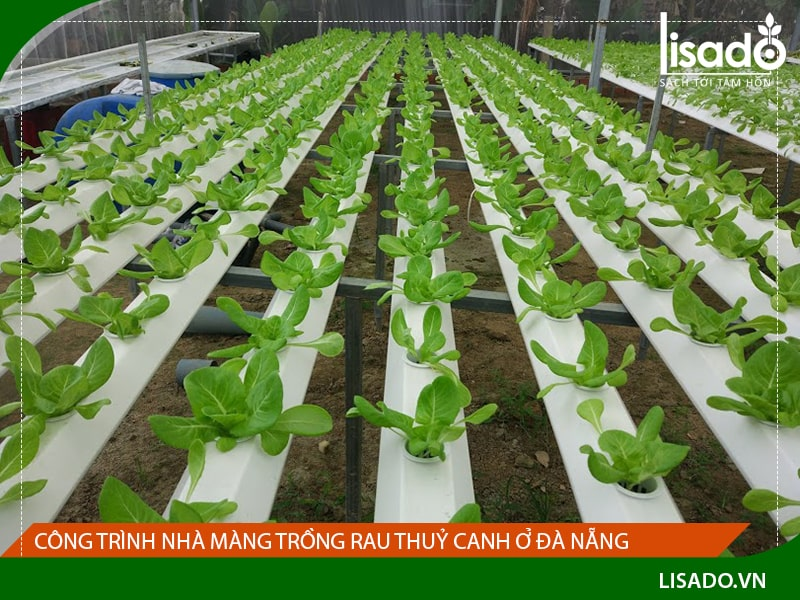 Công trình nhà màng trồng rau thuỷ canh ở Đà Nẵng