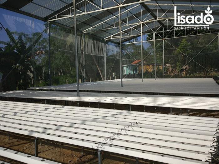 Hệ thống giàn trồng rau thủy canh trong nhà màng ở Đà Nẵng
