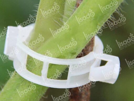 Kẹp nhựa thân cây chuyên dụng cho cây ăn quả
