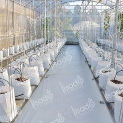 Túi bầu PE trồng rau 2 lớp chuyên dụng, giá tốt