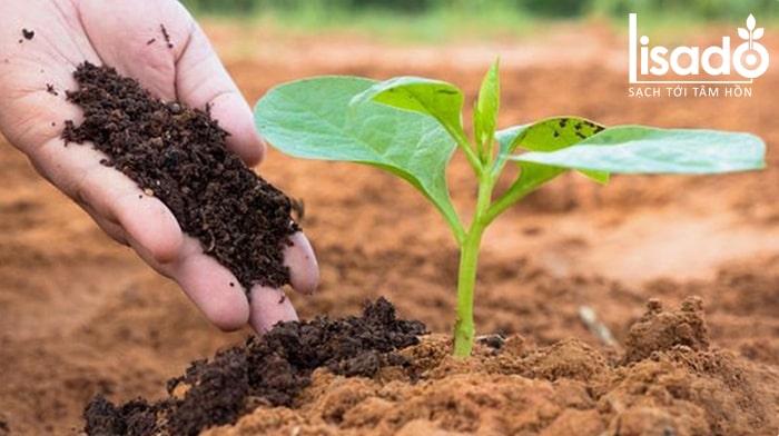 Phân bón hữu cơ dùng cho rau VietGap