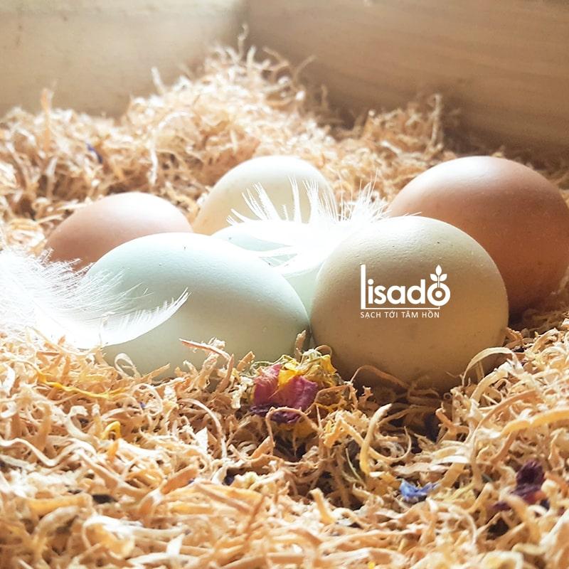Đặt trứng trong mùn cưa, trấu khô là cách bảo quản thường thấy
