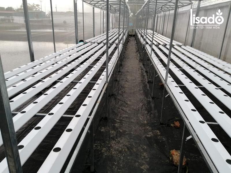 Hệ thống giàn thủy canh của công trình