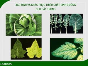 Xác định và khắc phục thiếu chất dinh dưỡng cho cây trồng