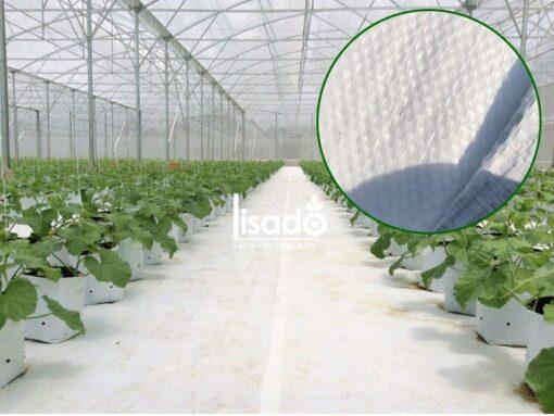 Bạt trải nền nông nghiệp cho nhà kính, nhà màng, dưa lưới