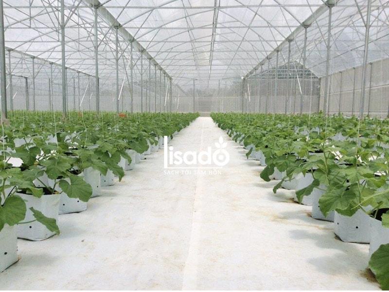 Bạt trải nền nông nghiệp chuyên dụng màu trắng