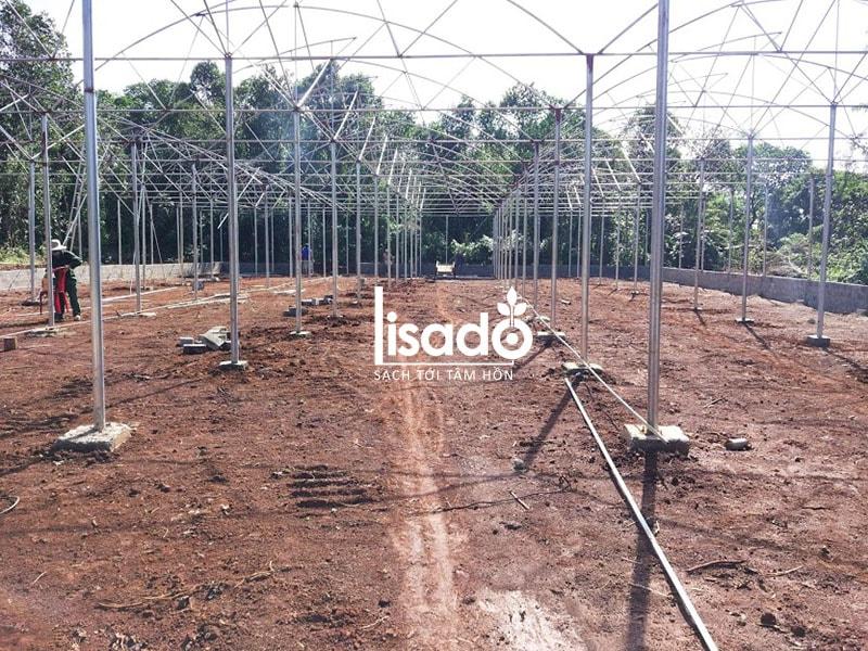 Dự án trồng rau thủy canh 1200m2 tại Quảng Trị