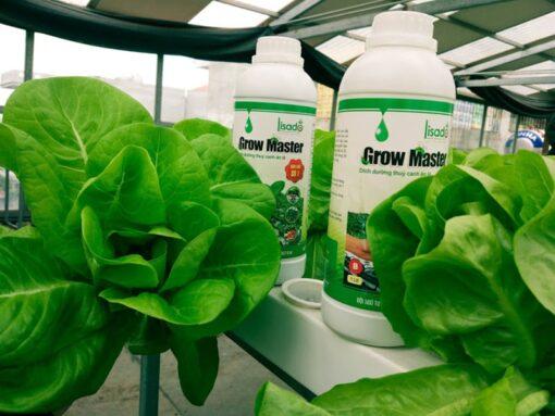Dung dịch thủy canh Grow Master chai 500ml cho rau ăn lá