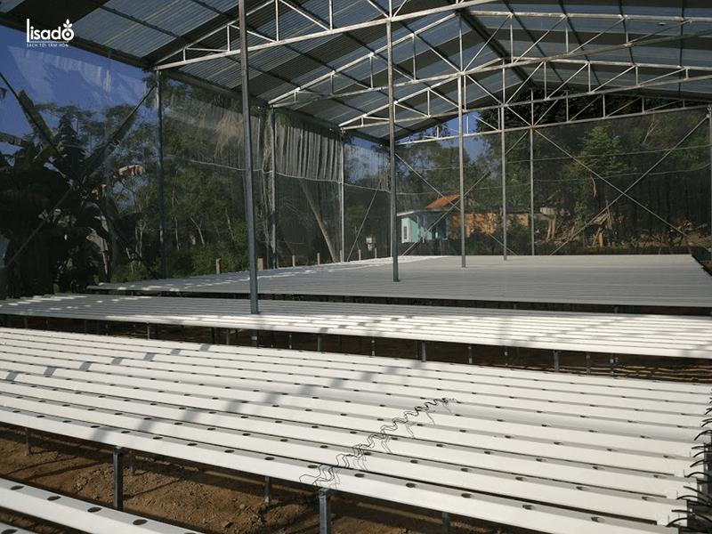 1000m2 trồng rau thủy canh bao nhiêu tiền?