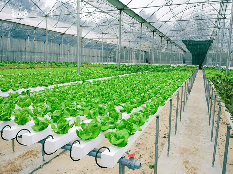 Lợi ích khi sử dụng hệ thống nhà màng trồng rau sạch thủy canh