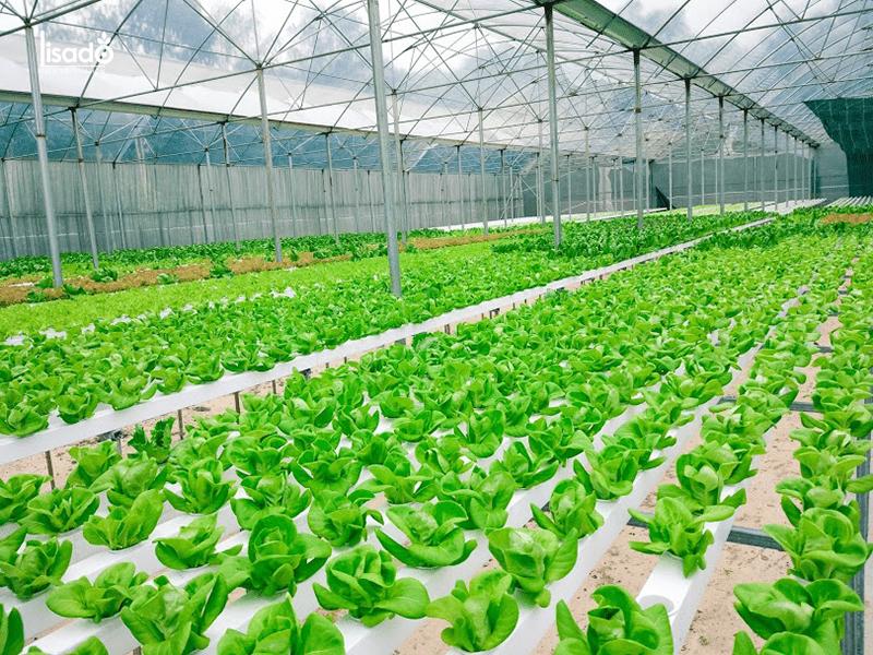 Tổng quan hệ thống nhà màng trồng rau sạch công nghệ cao