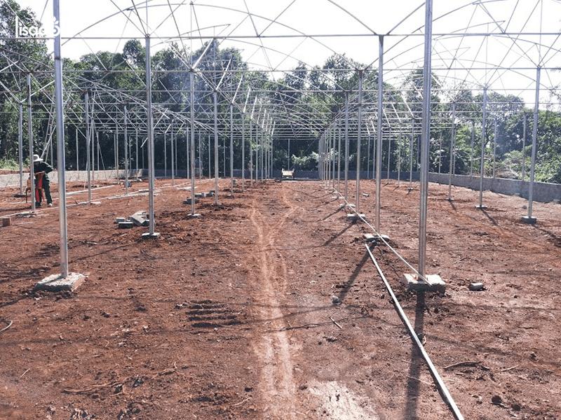 Dựng nhà màng trồng rau thủy canh