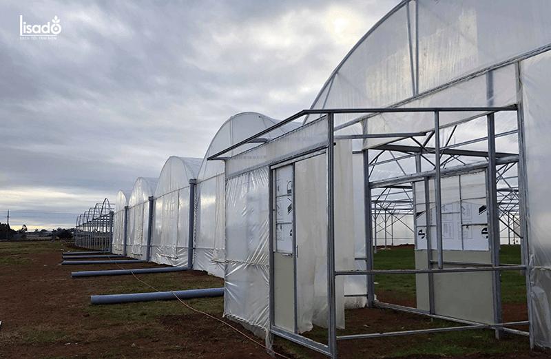 Thiết kế nhà kính, nhà màng trồng 1000m2 cà chua