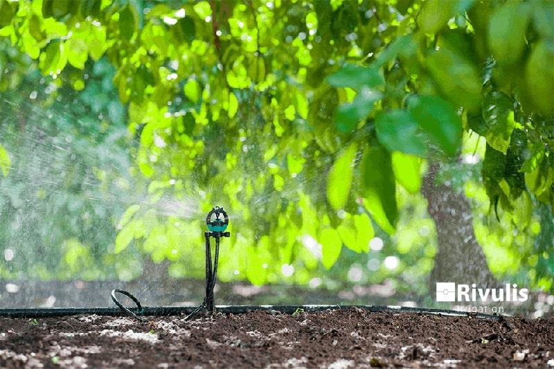 Béc tưới phun mưa S2000 có bù áp - Rivulis (Israel)