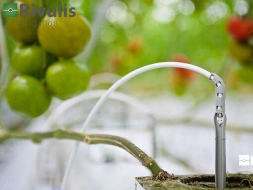 Ống LDPE 3x5mm - Rivulis (Israel) chống tia UV, giá tốt