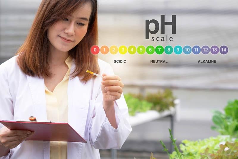 Kiểm tra pH khi trồng rau thủy canh