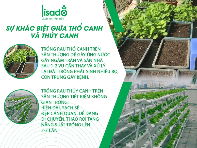 Trồng rau thuỷ canh và trồng rau địa canh – nên chọn cái nào?
