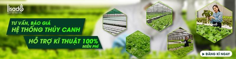Khảo sát, tư vấn hệ thống trồng rau thủy canh
