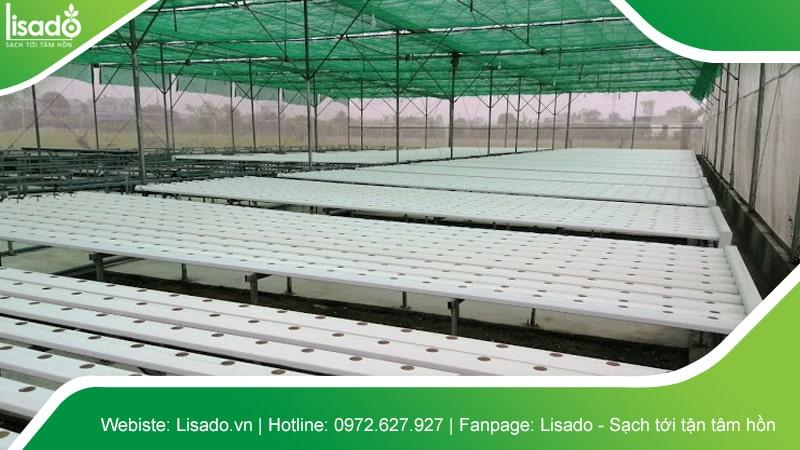 Hình ảnh dự án thi công nhà màng - nhà lưới nông nghiệp