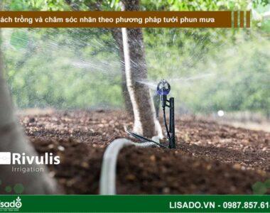 Cách trồng và chăm sóc nhãn theo phương pháp tưới phun mưa
