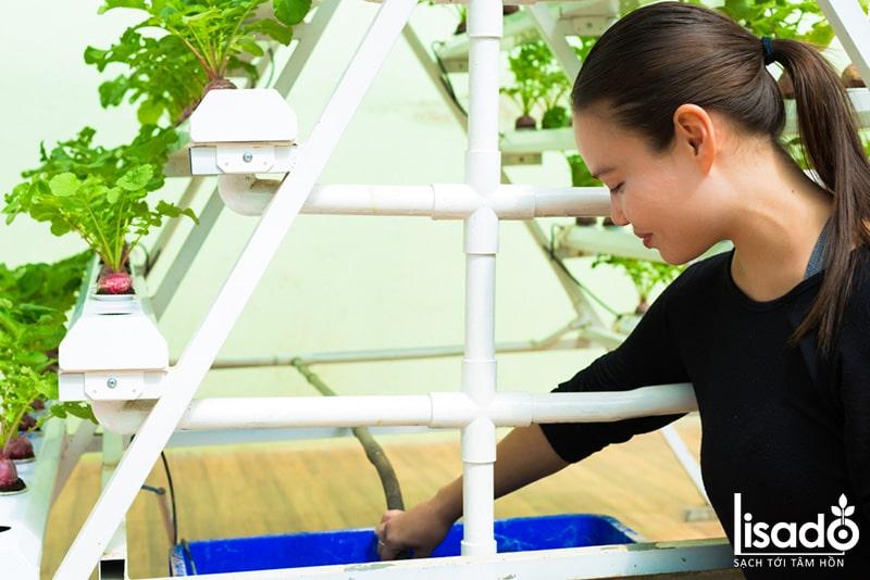 Với mô hình trồng rau thủy canh hồi lưu