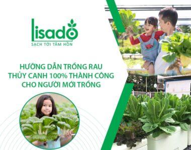 Hướng dẫn trồng rau thuỷ canh 100% thành công cho người mới trồng